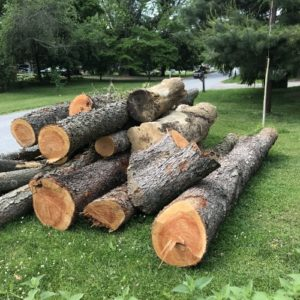 Tree removal service in New Castle County