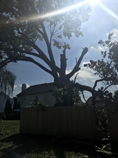 tree removal service in Delaware